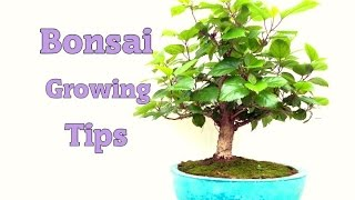 Bonsai Growing Tips 2016 - HIndi