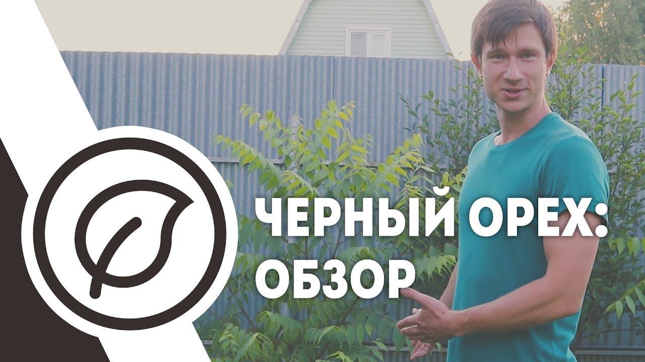 Запорожье - Произведения из маньчжурского ореха - YouTube