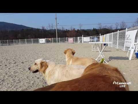 [KOREA DOG TV LIVE] 170316 #설악펍하우스 #속초애견호텔 #dog