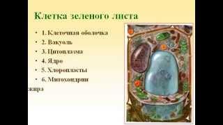 Строение и разнообразие растительных клеток.AVI