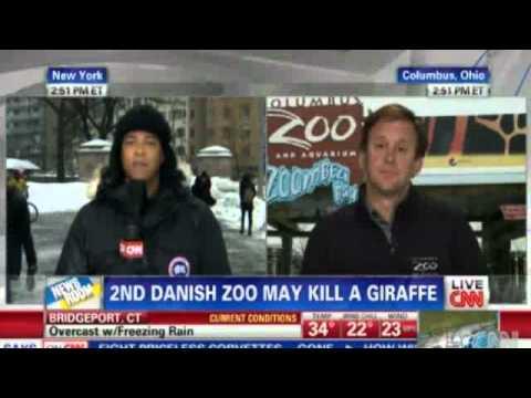 Denmark: Second zoo may euthanize a giraffe named Marius | EXCLUSIVE