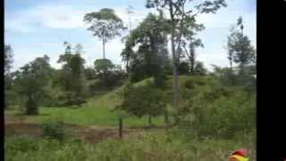 Costa Rica. 1000 hectares (2470 acres) Rice Farm Priced reduced!!