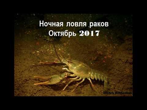 Видео ночная охота на раков
