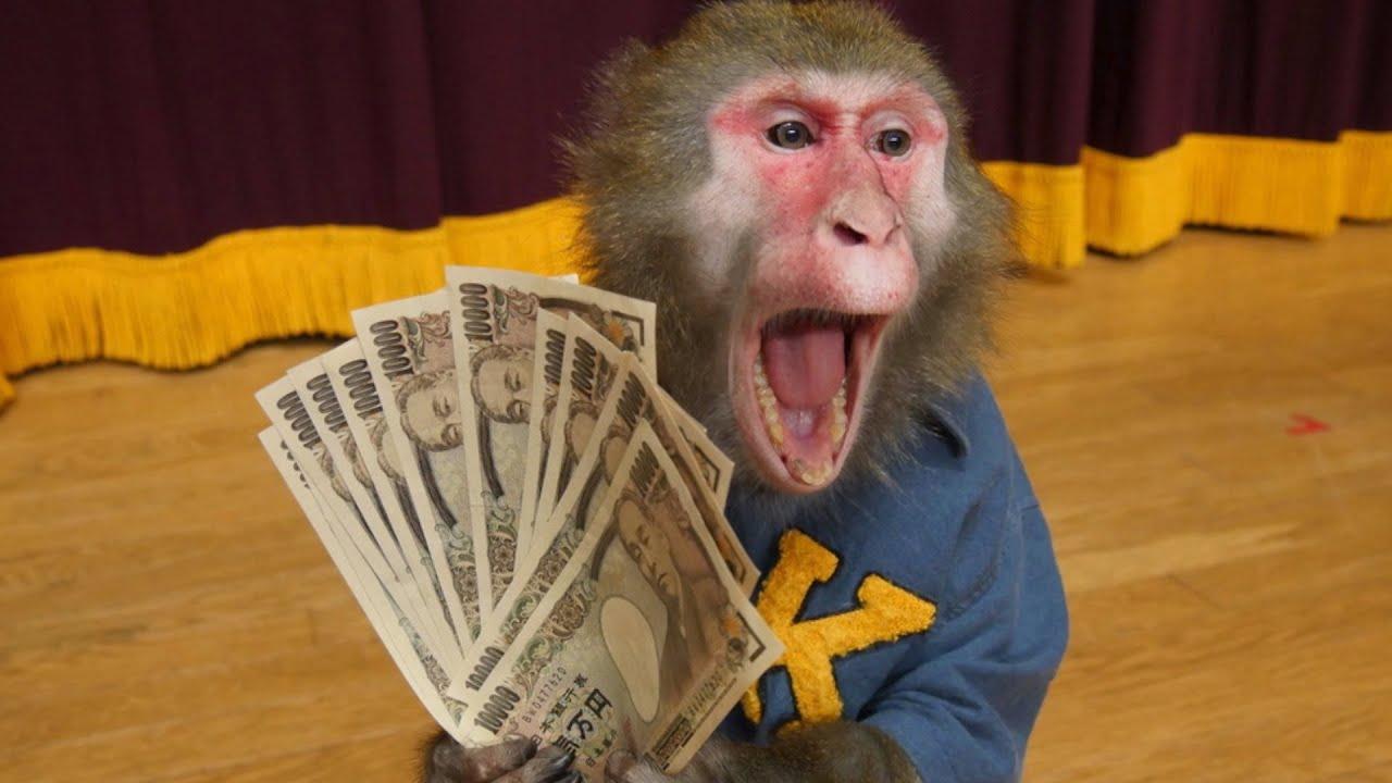 お猿さんにYouTubeからお金をもらっていることがバレて修羅場。【天才猿の日常】