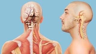 Признаки и симптомы инсульта и синдрома позвоночной артерии - противопоказания к проведению массажа