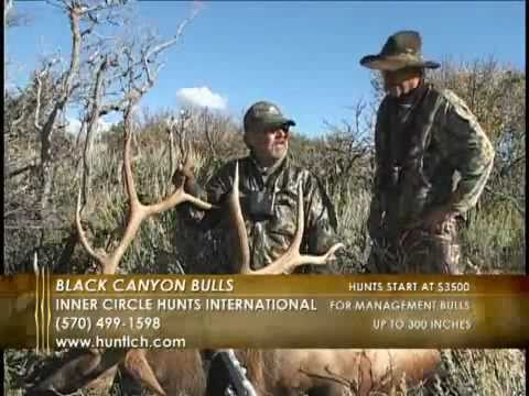The Bulls Of Black Canyon - New Mexico Elk Hunting
