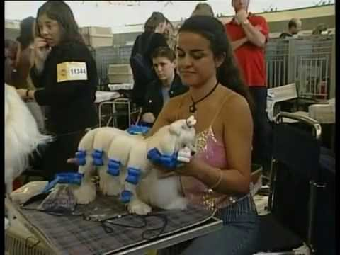 The World's Largest Dog Show! Amsterdam