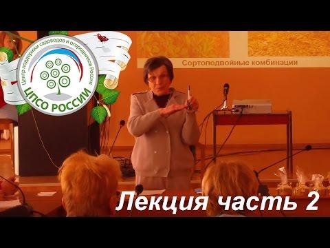 Слива Болховчанка: описание сорта и фото