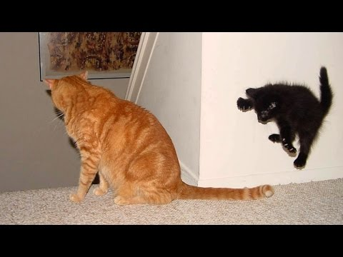 YOU JUST CAN'T HOLD YOUR LAUGH IF YOU SEE THIS! – Funny ANIMAL compilation