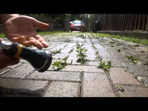 How To Remove Weeds From Interlocking (Without A Pressure Washer)