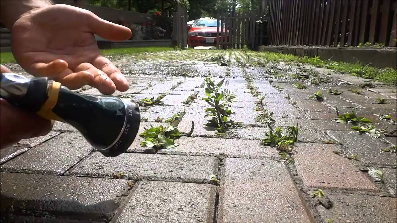 How to remove weeds from interlocking without a pressure washer how to remove weeds from interlocking without a pressure washer youtube solutioingenieria Gallery