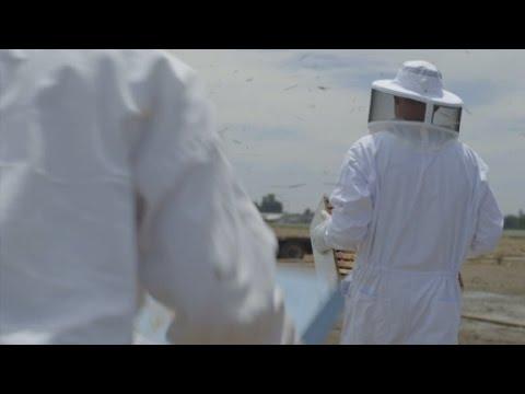 Morgan Spurlock investigates unexplained bee deaths