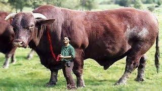 لن تصدق ماستراة.؟؟ثمانية حيوانات  تم تهجينهم من قبل العلماء.!!!