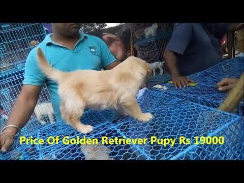 Galiff Street Dog Market Kolkata With Price l Together