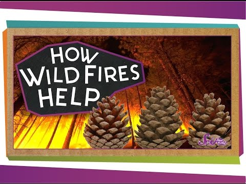 How Wildfires Help!