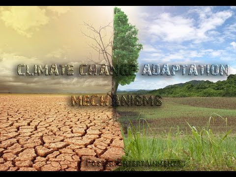 Climate Change Documentary in Zimbabwe: Adaptation measures