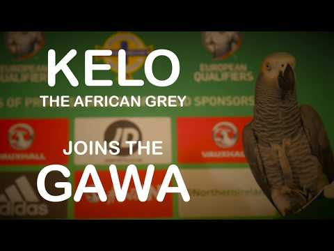 Kelo the African Grey Parrot joins the GAWA