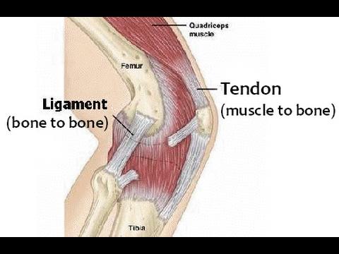 strengthen ligaments tendons for bjj youtube. Black Bedroom Furniture Sets. Home Design Ideas