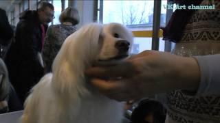 Китайская хохлатая пуховая собака очень любит причёсываться!