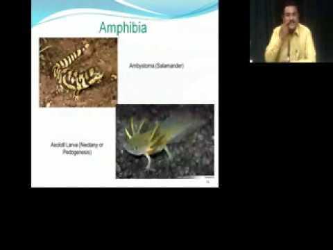 Zoology UG B.Sc Sem-II: Classification of Chordata by Dr. Alok Varma on 04 Feb 2015