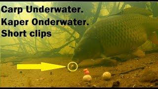 Karpervissen onderwater beelden fail Carp fishing fails underwater footage