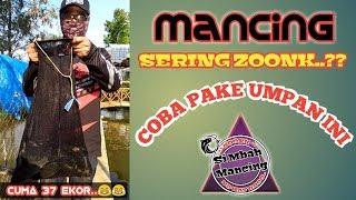 Download Video MANCING IKAN MAS NARIK TERUS SAMPAI PUAS..UMPAN JUARA TOTAL MP3 3GP MP4