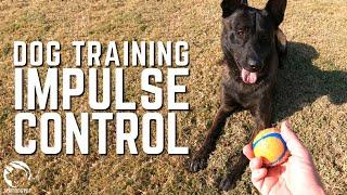 Dog Training for Impulse Control