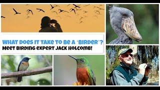 Birdwatching PA- Meet birding expert Jack Holcomb! - Jo Painter - The People Chronicles