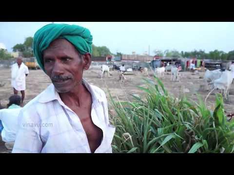 Beef ban: Manapparai cattle market report I மணப்பாறை மாட்டு சந்தை Part 1