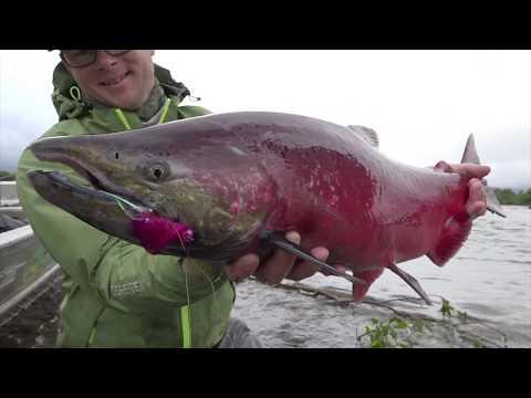 Angeln Auf Lachs In Alaska: Ein Wildes Wasser