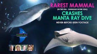 RAREST MAMMAL crashes Manta Ray dive - MUST SEE