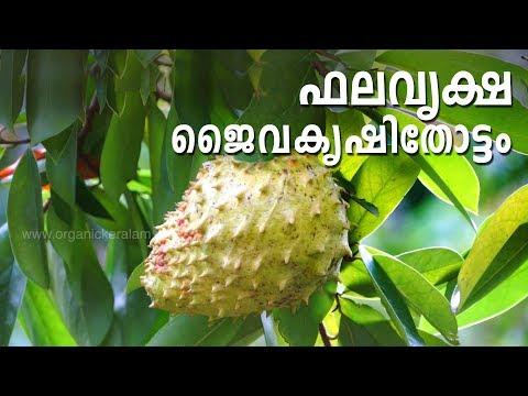 Sreekrishnapuram Jaiva karshaka Samithi |Organic Fruit Cultivation