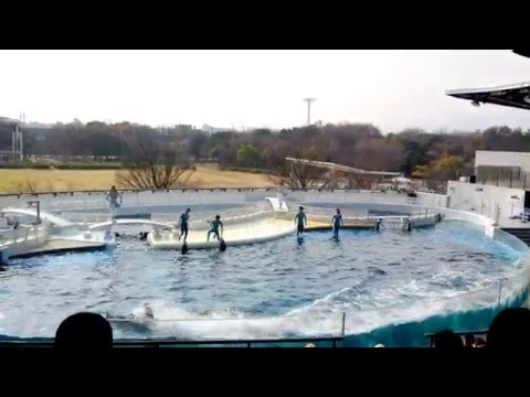 Japan Kyoto Aquatic Stadium Trip 2