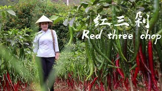 I picked some red chili and tomatoes to make a red Yunnan home-cooking dish: Red Three Chops
