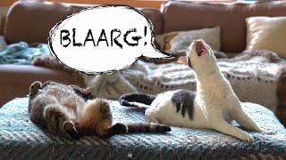 WEIRD CAT MEOW thumbnail
