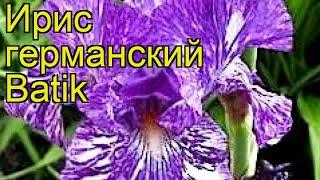 Ирис германский Батик. Краткий обзор, описание характеристик iris germanica Batik