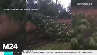 Ураган вирує по всій Росії - Москва 24