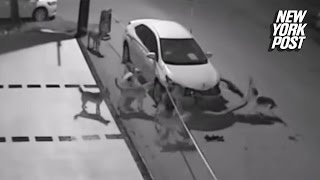 شاهد.. مجموعة من الكلاب تحطم سيارة