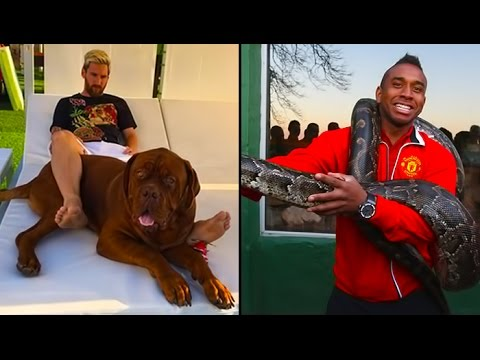 Thumbnail: Most Beautiful & Funny Photos Of Footballers With Animals II Part 1 II