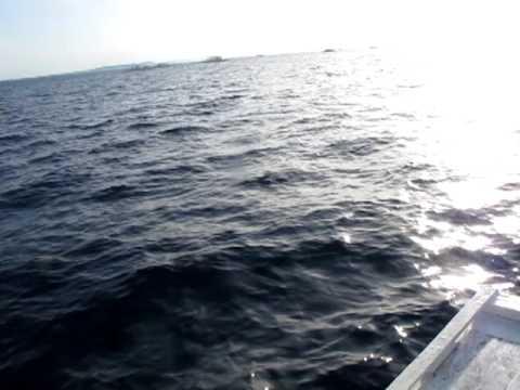 Dolphin Watching at Panglao Island Bohol Philippines