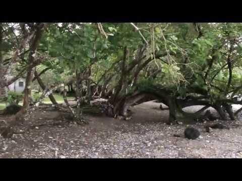 P&O Destination: Pentecost, Vanuatu, Pacific Island