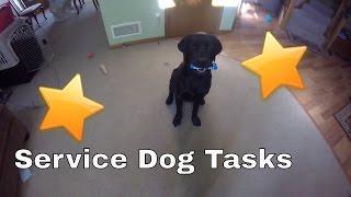 Service Dog Tasks