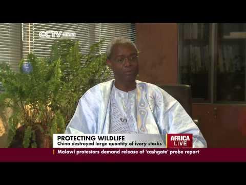 World Wildlife Day: Ibrahim Thiaw, UNEP talking on Wildlife Conservation