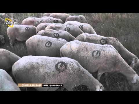 ÇOBANLA BAŞ BAŞA 8. BÖLÜM/  ÇANAKKALE- BİGA