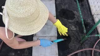 Выращивание  огурцов на агроволокне. Огород без хлопот!