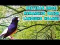 Kretekan Murai Batu Emosi Memancing Gacor Langsung Ngamuk  Mp3 - Mp4 Download
