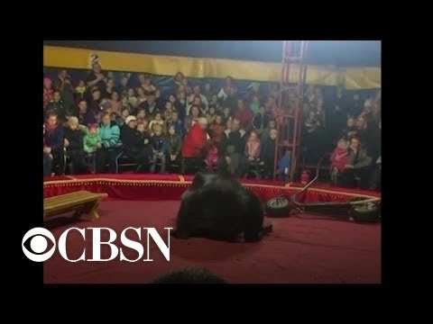 Mix Mornings with Laura Diaz - GRAPHIC Video: Circus Bear Attacks Trainer in Russia