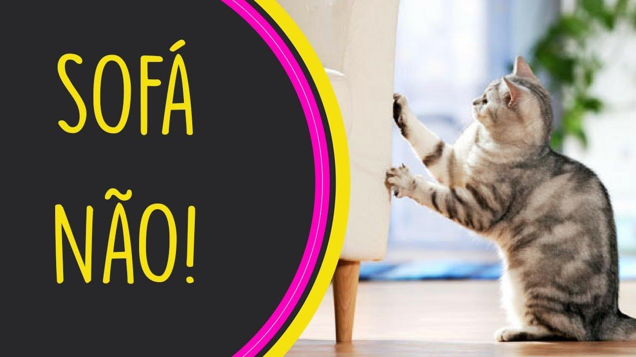 Tutorial ensine o seu gato a n o arranhar o seu sof - Sofas para gatos ...