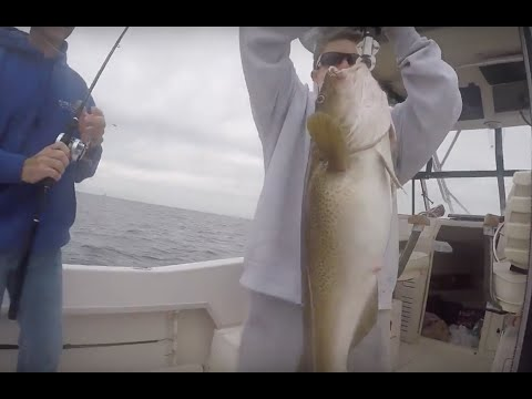 Offshore Wreck Fishing New Jersey For Cod Fish