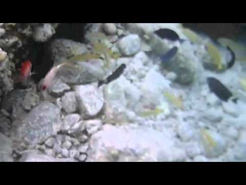 Aquabotix HydroView Sport in the Caribbean: July 2012